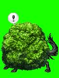 dog bush